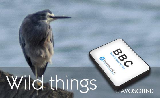 BBC Natur Geräusche Archiv - Wilde Sachen entdecken