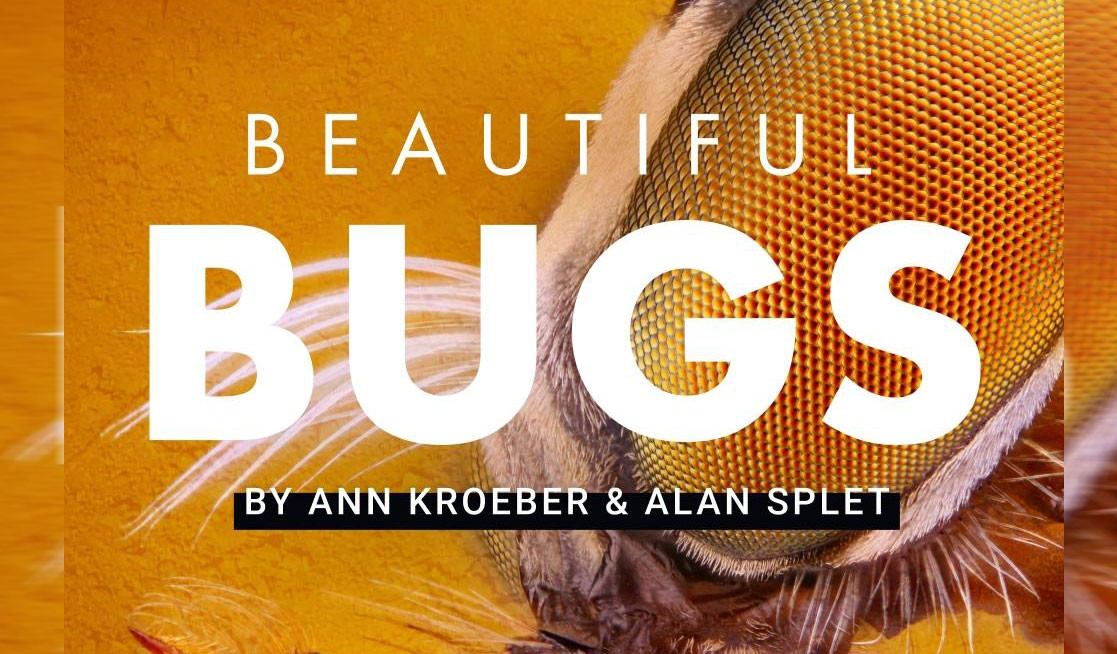 Beautiful Bug Sound Effects Library Cover Image