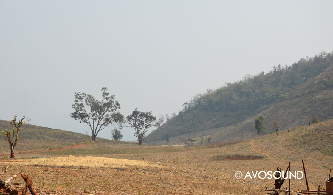 Trekking in the Burmese jungle - dry wasteland