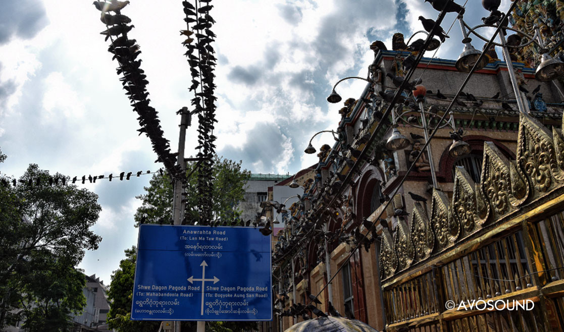 Tauben in Yangon - Tauben sind heilig in Burma