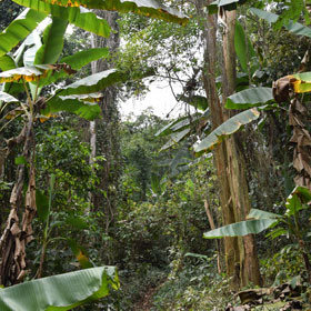 Myanmar Travel Log Trekking in the Burmese Jungle