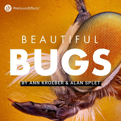 Beautiful Bugs Product Picture