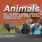 Sounddogs - Tiere, Download Version Produkte Bild