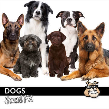 Sounddogs Dog Sound Effects Produkte Bild